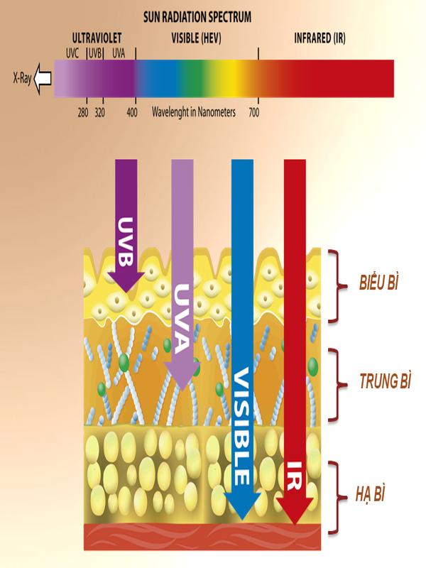 Ảnh hưởng của UVA, UVB, HEv, IR với làn da.